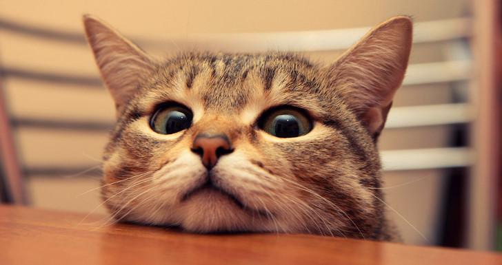 felixkatzenfuttergutschein