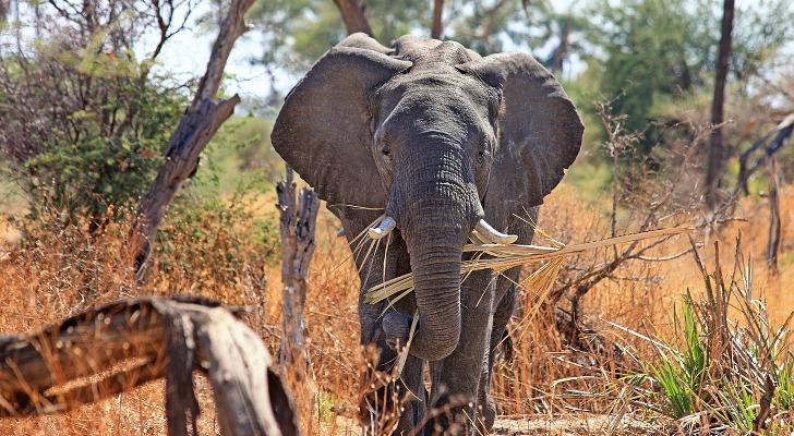 reise nach suedafrika