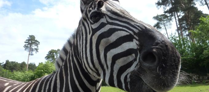 Serengeti Park: Kostenloser Eintritt für Kinder