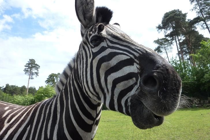 freier Eintritt serengeti park