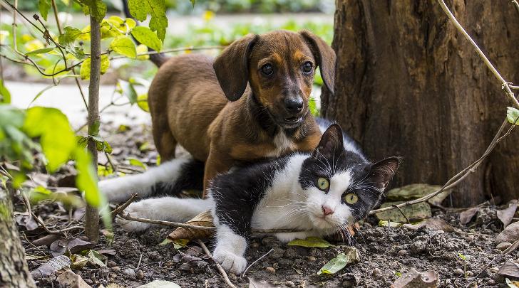 gratis Tiernahrung fuer eine Woche