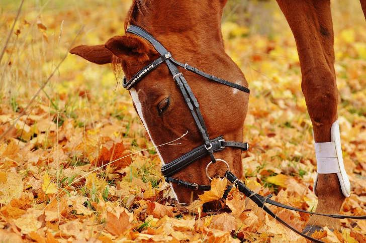 gratis Pferdefutter