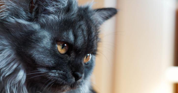 Purina Katzenfutter