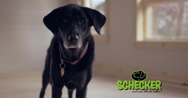Schecker: Hundefutter Produkttester gesucht!
