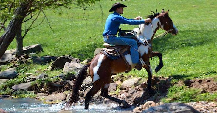 Pferde Pflege kostenlos