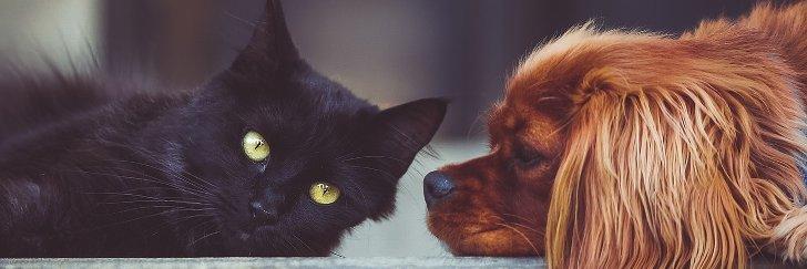 werbegeschenk fuer hund und katze
