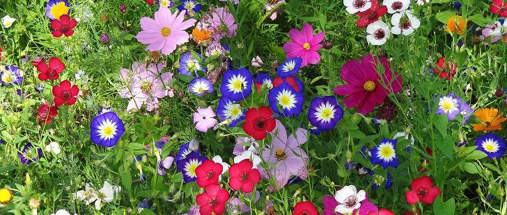 Tolle wiese dank gratis Blumensamen