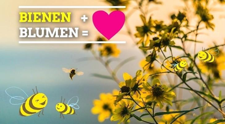 mehr Blumen ist gleich mehr Bienen
