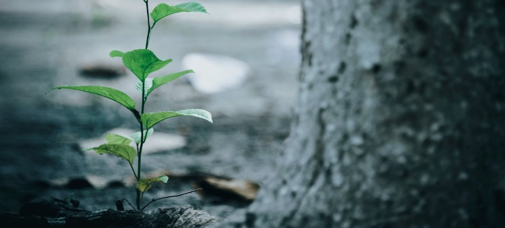 WASA Baum